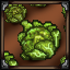 Cabbage Growing icon.png