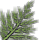 Fern icon.png